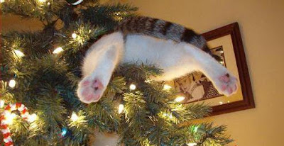 Кот и новогодняя елка картинки