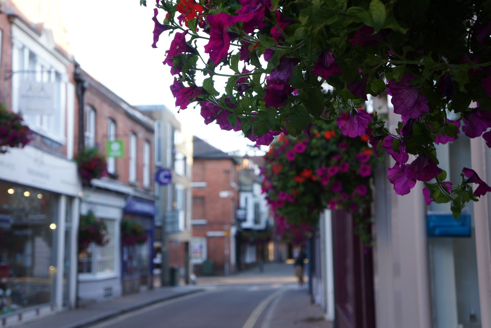 purple flowers and winchester street