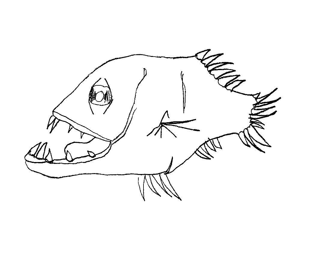 Animales Herbivoros Dibujos Para Colorear Dibujos De Carnivoros