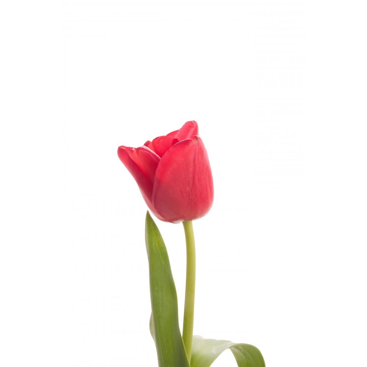valentine day flowers Valentine s day Bundle Flowers NYC