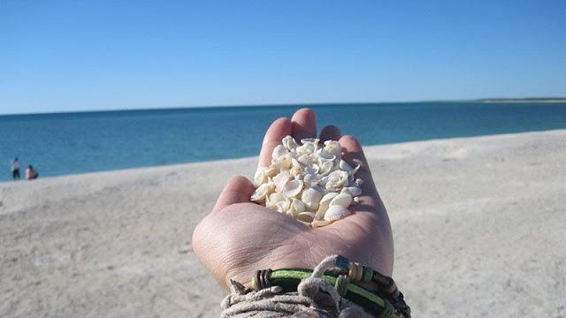 penampakan kerang putih yang ada di Shell Beach