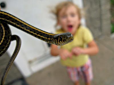 Do Common Garter Snakes Have Teeth? - YouTube   Garter Snake Teeth
