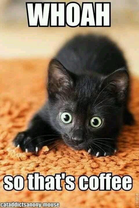 Grumpy Cat Memes Clean Funny Grumpy Cat