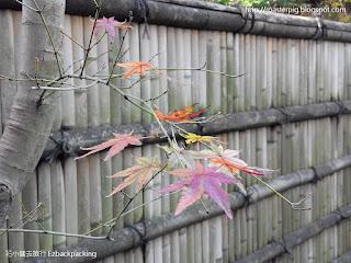 2015年大阪奈良關西夜楓紅葉祭情報 Copyright花小錢去旅行