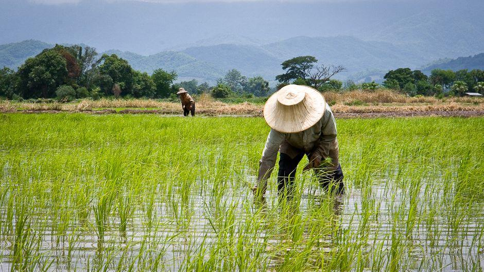 3 Contoh Pemberdayaan Masyarakat Di Bidang Pertanian Inovasi Desa