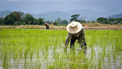 Contoh Pemberdayaan Masyarakat di Bidang Pertanian