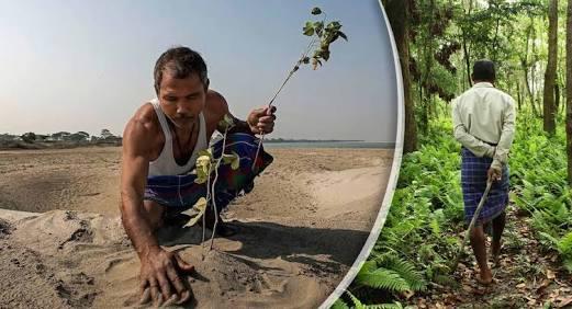 Plantó árboles cada día por 37 años, ni te imaginas como luce ahora