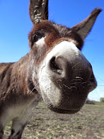 Doolin the Donkey