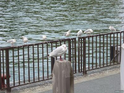 河川敷の鳥