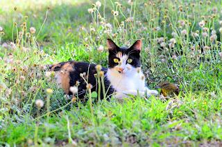 kitty with bird