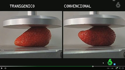 comparativa firmeza fresa transgénica y convencional con analizador de textura TA.XTPlus