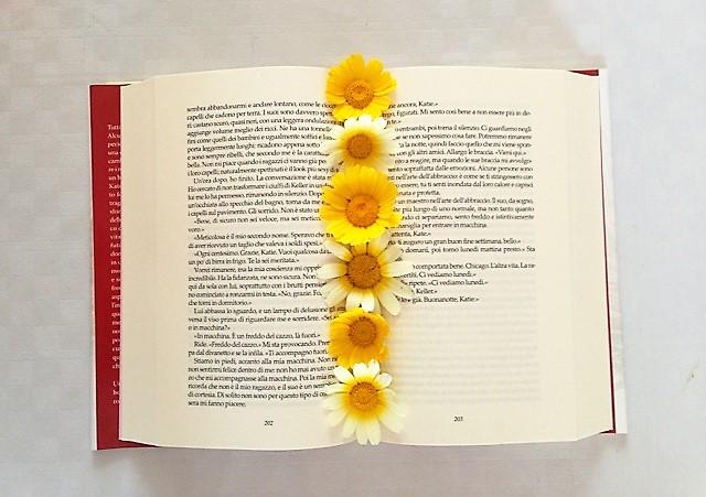 libri e margherite