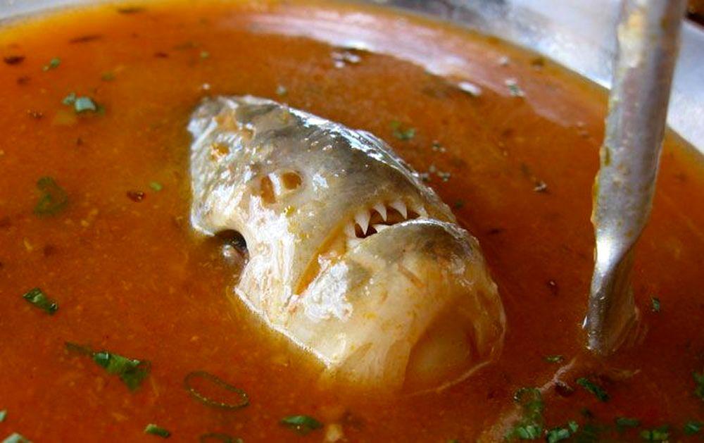 Sup Ikan Piranha dari Brazil (trufflepig.com)