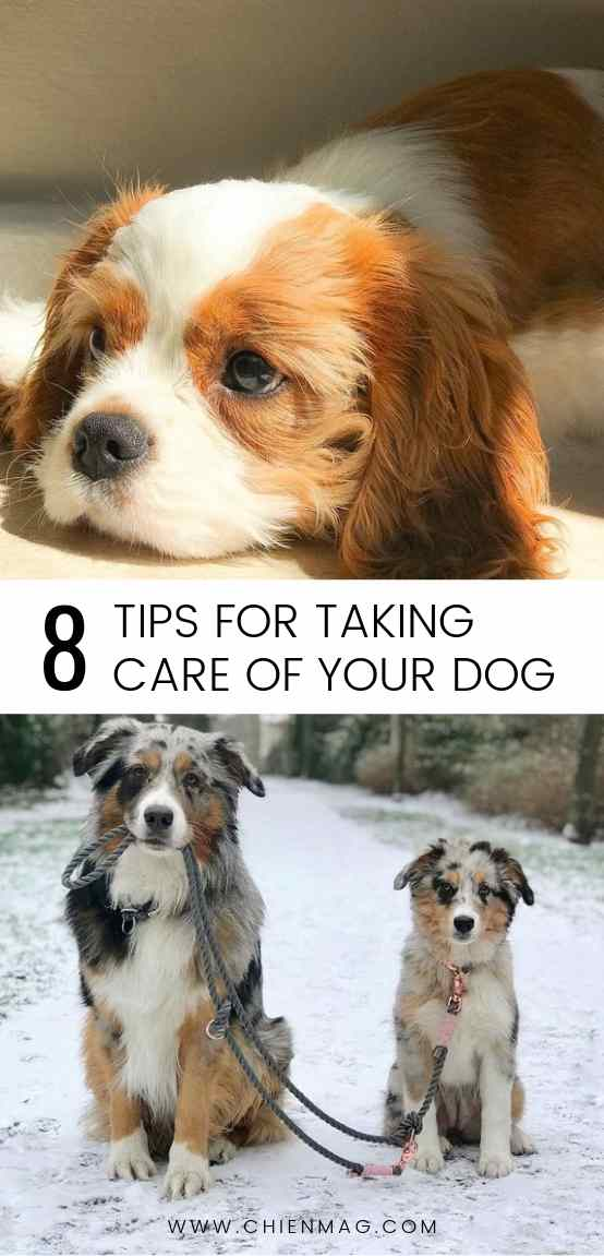 8 Tips for Taking Care of Your Dog