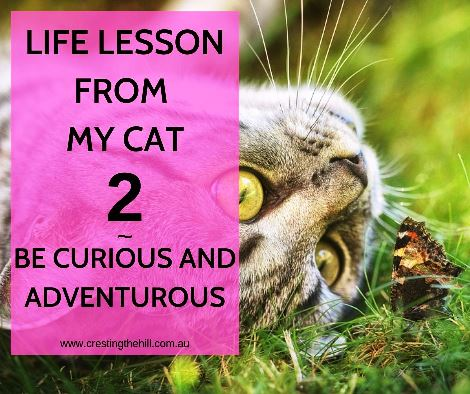 Cats have a lot to teach us - Lesson Number 2 is to always be curious and ready for adventure #inspiration #lifelesson