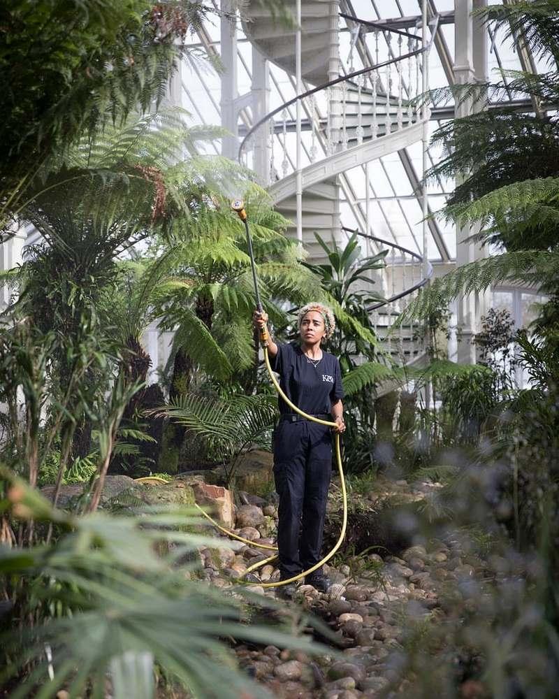 jardinera regando plantas en un invernadero de cristal