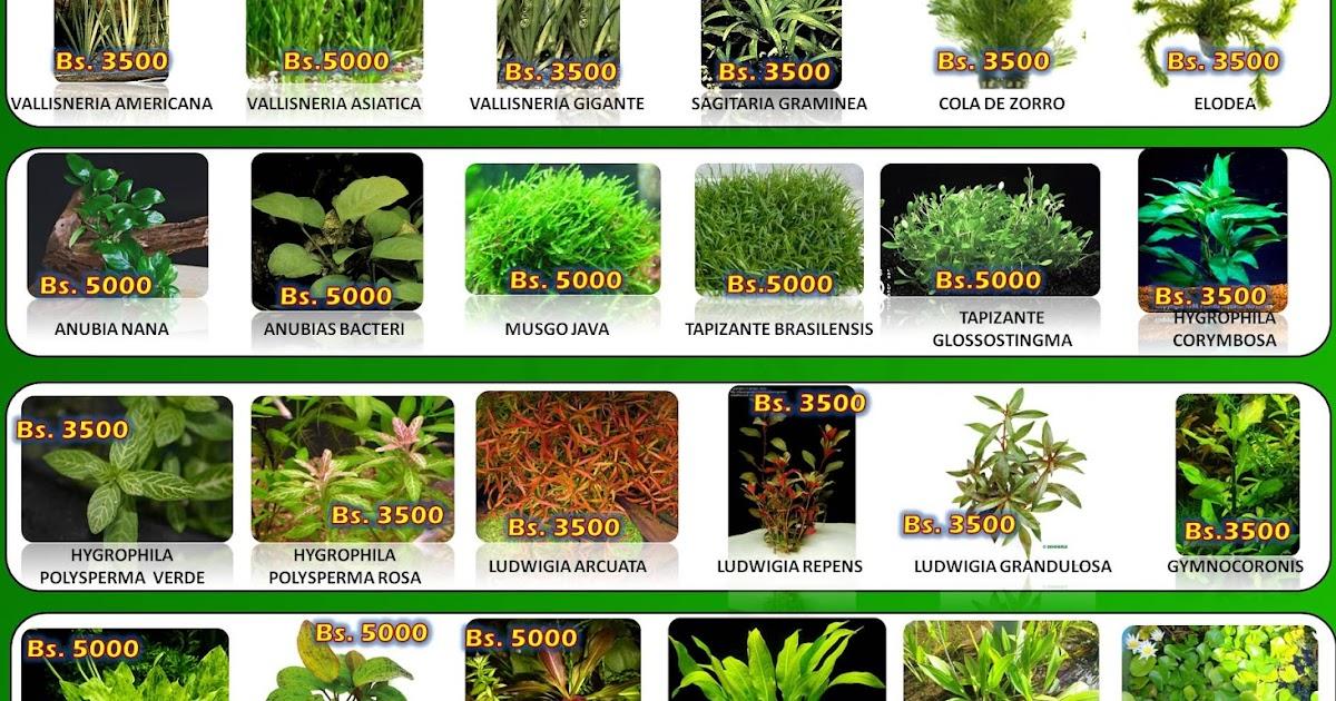 Acuario virtual catalogo de plantas naturales inf for Acuario valencia precio