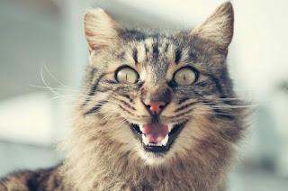 Kenapa Kucing Mengeong Terus Mencari Anaknya