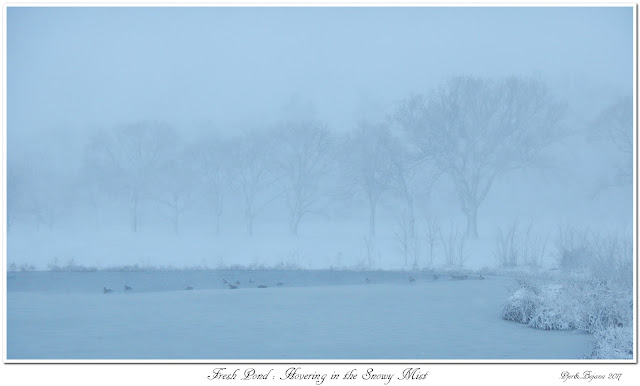 Fresh Pond: Hovering in the Snowy Mist