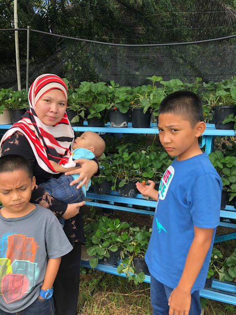 Sisterhood Di Laman Strawbery Fig Suhanis