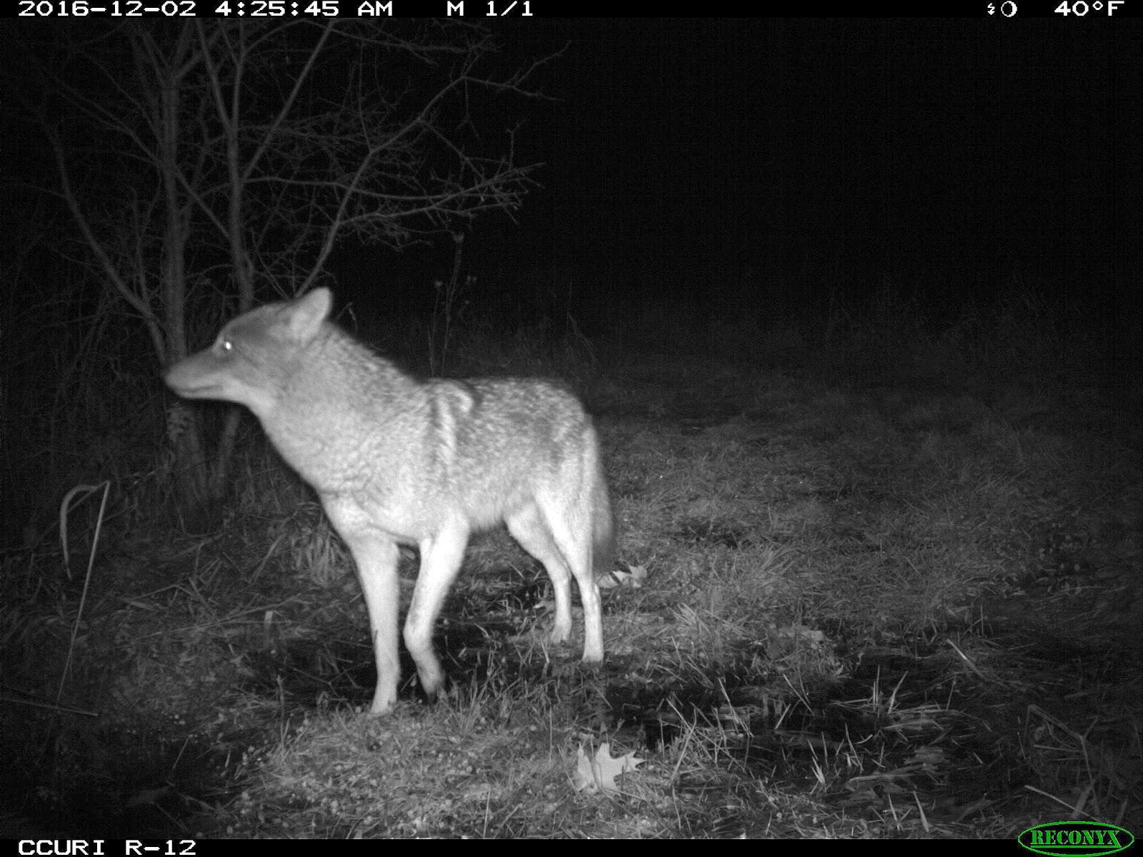 backyard beasts the camera trap tells the story