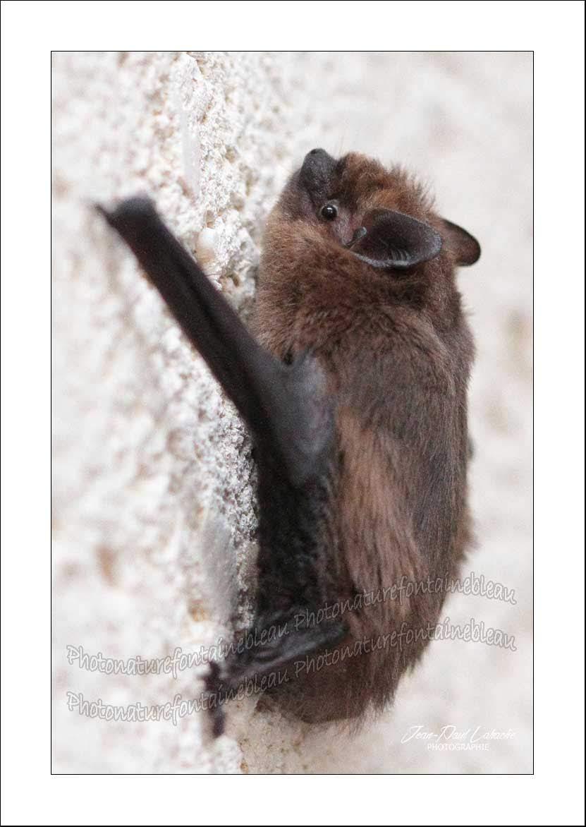 Souris Dans Les Murs Comment Faire un regard différent sur la nature: les chauves-souris