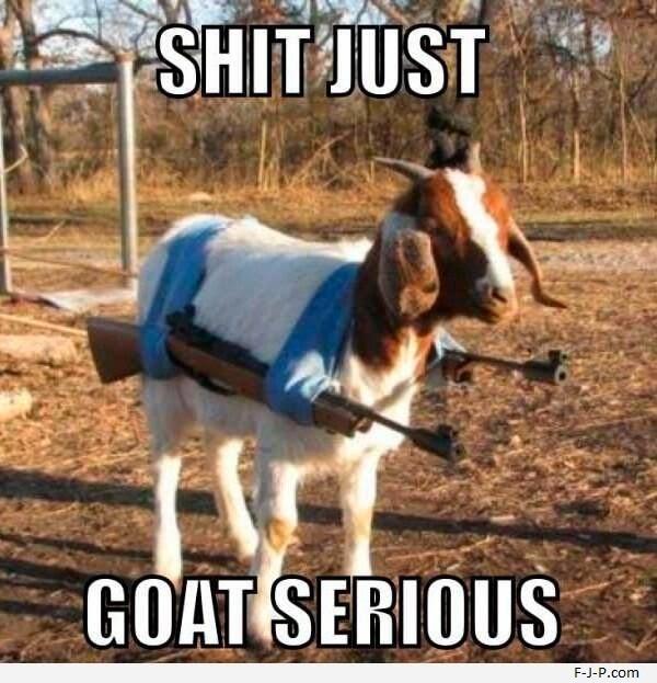 Funny Goat Pun Joke - Just Goat Serious