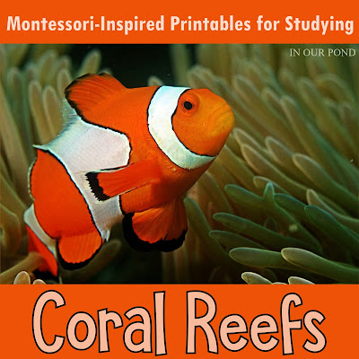 Resources with a Montessori bend for learning more about Coral Reefs