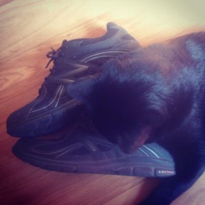 Gucci le chat noir et mes baskets New balance