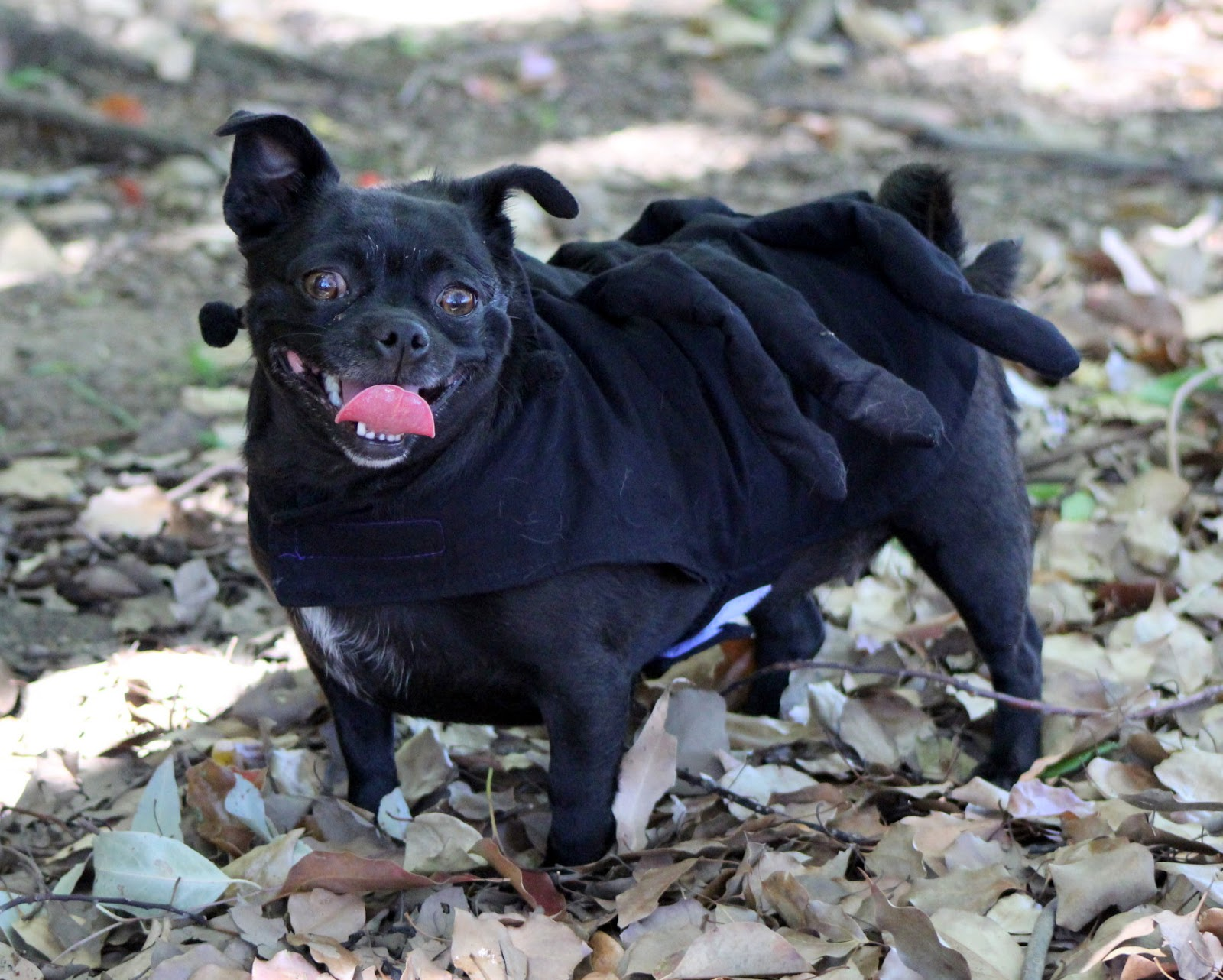 Halloween Dog Costumes, Treats & Toys | Australian Dog Lover