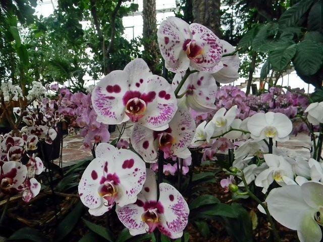 kwiaty, tropikalne, palmiarnia, wystawa