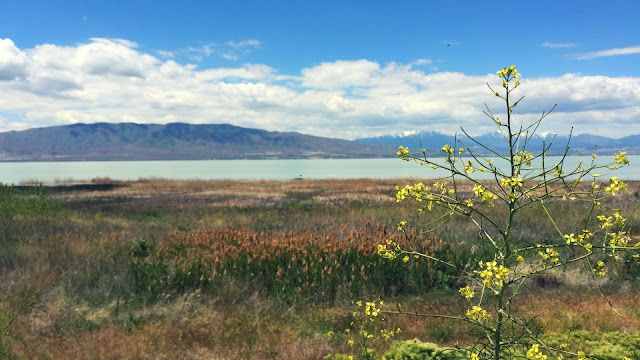 Utah Lake Flower Desktop Wallpaper // www.thejoyblog.net