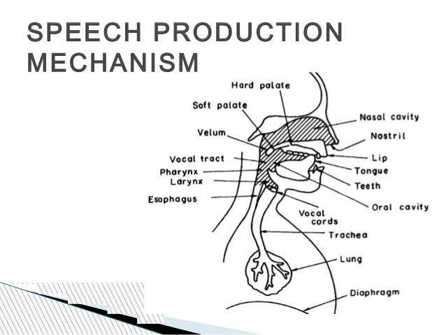 churvavengz: ENGLISH 15 STUDENTS: Speech Mechanism