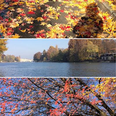 Autumn in Turin