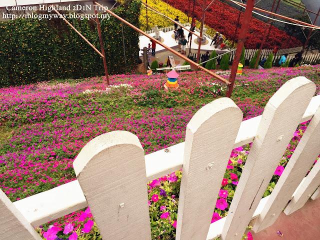 Weekend Getaway –  Cameron Highland (our cuti-cuti Malaysia)