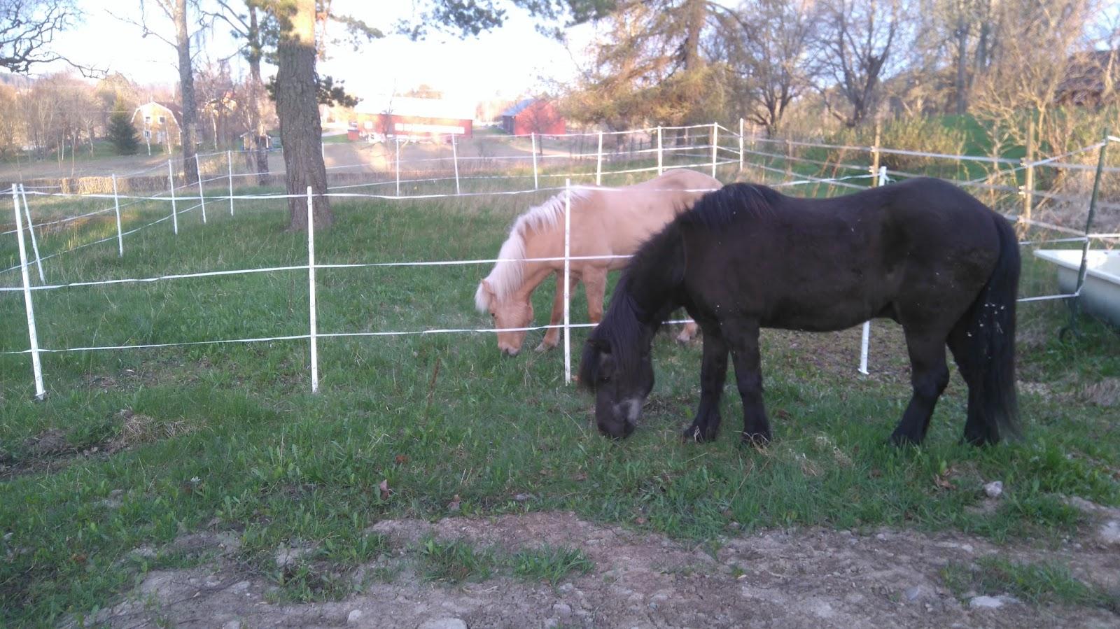 avmaska häst byta hage