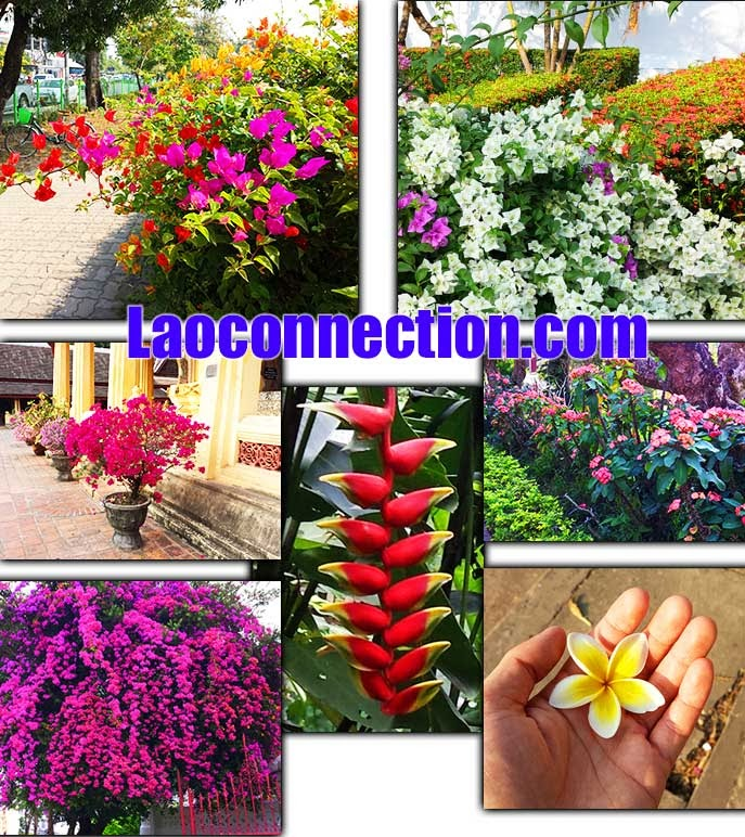 2013 December Laos Trip - Collage of Flower pictures