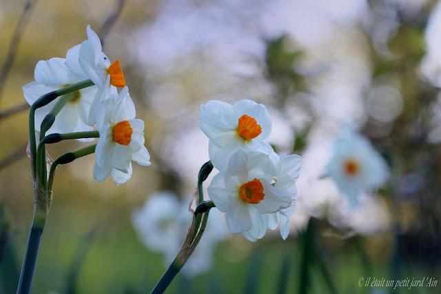 fleur parfumée blanche coeur orange