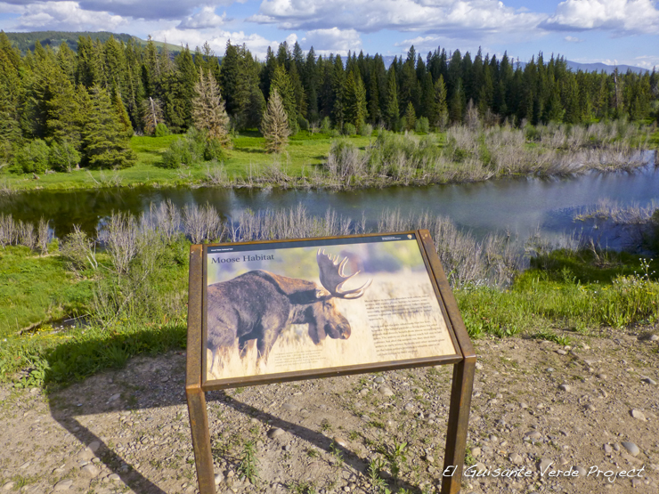 Moose Wilson Road - Grand Teton National Park por El Guisante Verde Project