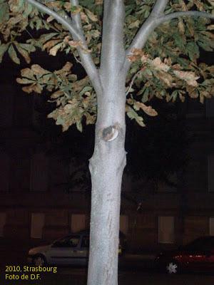 un copac fotografiat noaptea