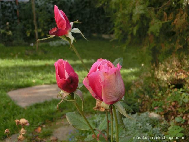 как жить в венгрии, сад и розы, жизнь в доме