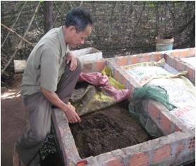 Trùn Quế An Giang mang giá trị cao cho người nông