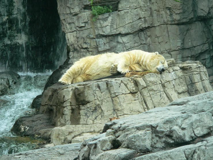 8. The Central Park Zoo - Top 10 Things to See and Do in Central Park, NYC