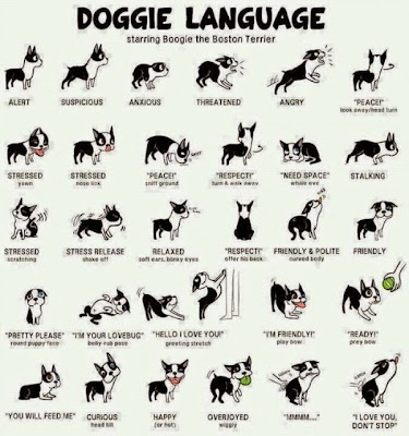 How to read your dog's body language?