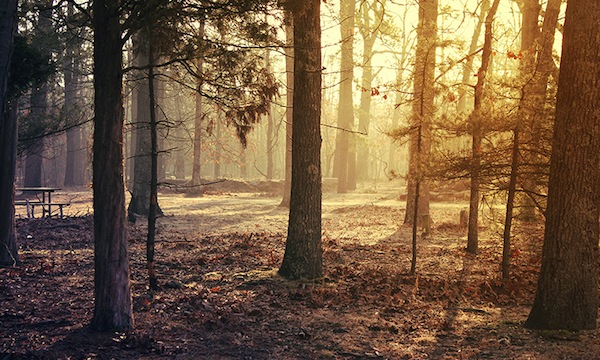Morning Chill forest trees galaxy S4 hd wallpapers