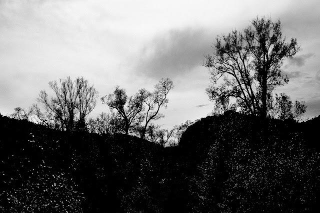 Piktrorializm. Drzewa nad Dunajcem. Koncepcyjna fotografia krajobrazu. fot. Łukasz Cyrus