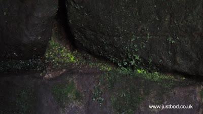 Luminous moss / Goblin Gold, Druid's Temple, Ilton, Yorkshire