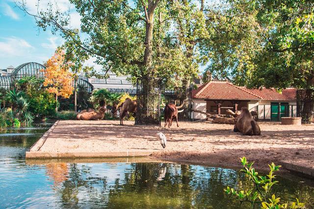 artis-zoo-1-poracci-in-viaggio-credit-to-@wanderlustabout