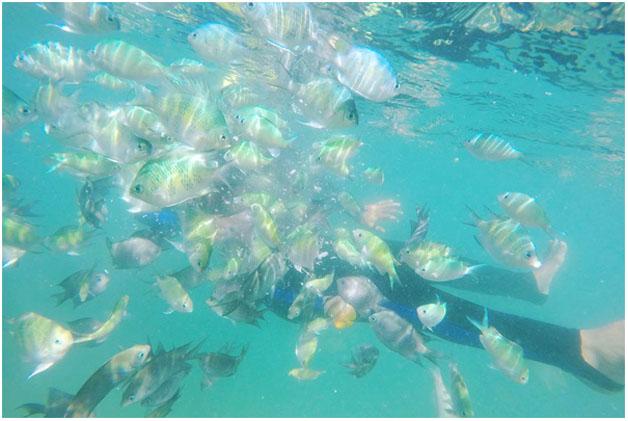 Snorkeling-Gili-Terawangan
