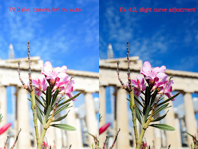 image of flower in front of Acropolis